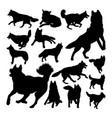 husky dog animal silhouettes vector image