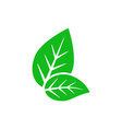 leaf icon vector image