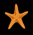 realistic colorful starfish on black background vector image
