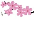 Stylized cherry Japan cherry branch with blooming vector image vector image