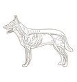 Vascular system of the dog vector image