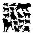 pug dog animal silhouettes vector image
