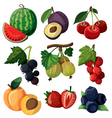 set isolated berries vector image vector image