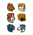 bulldogs and terriers mascot dog collection vector image