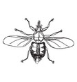 forest fly vintage vector image vector image