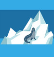 seal sits on ice floe and relax wild animal vector image