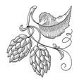sprig of hop decorative sketch vector image vector image