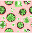 colorful modern tropical design of potted vector image