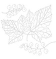 currant and leaves vector image vector image