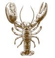 engraving drawing of big lobster vector image vector image