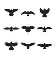 Flying bird silhouettes set
