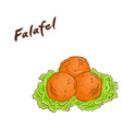 isolated cartoon hand drawn fast food falafel vector image vector image