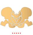 pelvis skeleton icon flat style vector image
