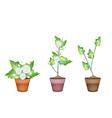 Three Jasmine Flower in Ceramic Flower Pots vector image vector image