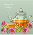 cup or echinacea tea and teapot vector image vector image