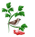 world sparrow day vector image vector image