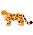 cartoon smiling jaguar vector image