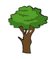 cartoon tree plant natural botanical ecology vector image