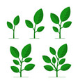phases plant growing set on white background vector image vector image