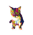 colorful cat vector image