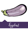 eggplant depicted in hand drawn graphics vector image vector image