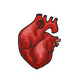 heart organ isolated icon vector image