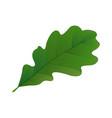realistic oak leaf vector image