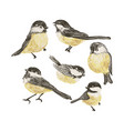 set funny realistic tits and bird feeder on vector image vector image