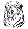decorative portrait of australian shepherd vector image vector image