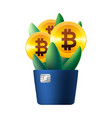 growing bitcoin icon like flower plant vector image