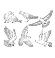 hand drawn pictures pigeons at different poses vector image vector image