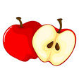 red apple cut in half vector image vector image