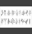 set of hand drawn decorative herbs vector image