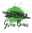 a green bean hand drawn vector image