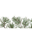 pine branches with green needles vector image vector image