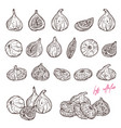 ripe figs hand drawn set vector image vector image