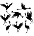 set of grey crowned cranes vector image vector image