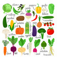 cartoon vegetables collection vector image
