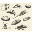 Set fresh draw drawn bread wheat sketch vector image