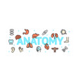 anatomy concept with thin line icons vector image vector image