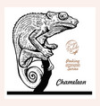 chameleon black sign isolated on white background vector image vector image