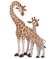 Giraffe with cub vector image