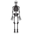 skeleton vector image