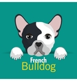 bulldog breed design vector image vector image