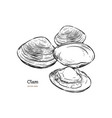 clams mussels seafood sketch style vector image vector image