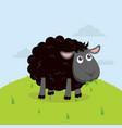 cute black sheep eat grass cartoon vector image vector image