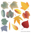 leaves collect-01 vector image vector image