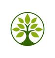 Tobacco-Tree-380x400 vector image vector image