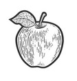 apple fruit sketch vector image vector image