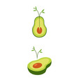 avocado flat sprouting plant healthy food vector image vector image
